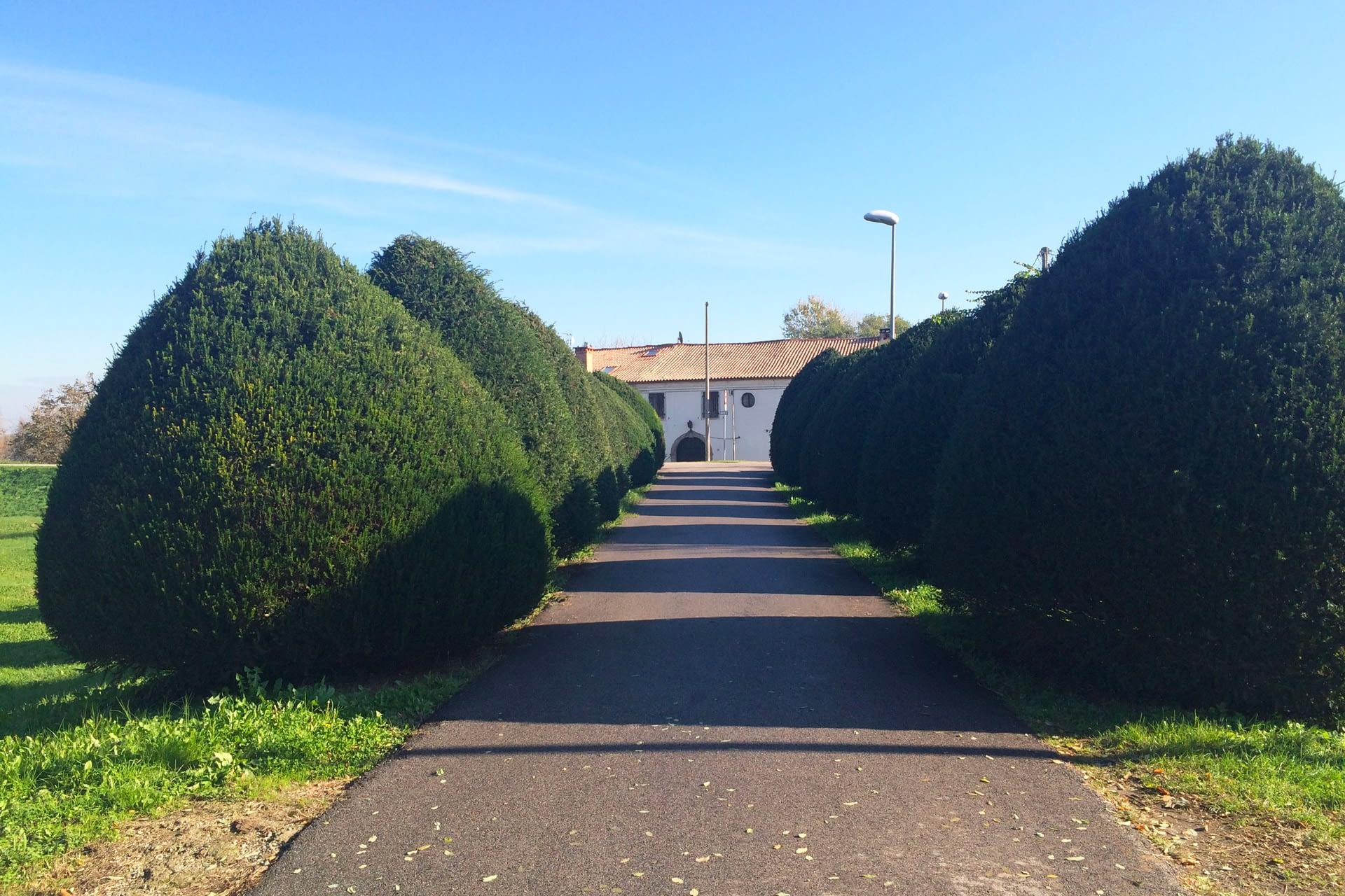 Pernumia_Viale vicino al percorso della ciclabile